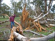 tree that was blown apart by a lightning strike